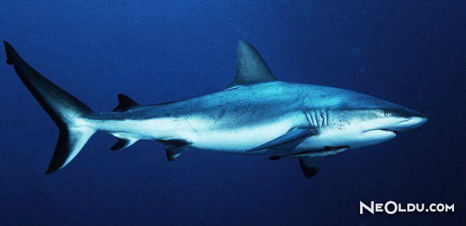 Falda Köpek Balığı Görmek Ne Anlama Gelir?