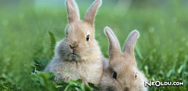 Tavşan Burcu Erkeği Genel Özellikleri