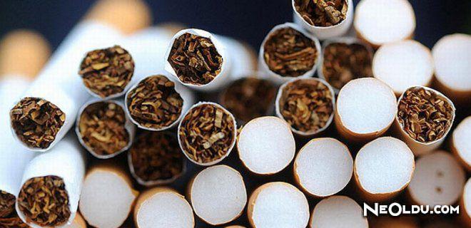 Tütün mü Daha Zararlı Sigara mı?
