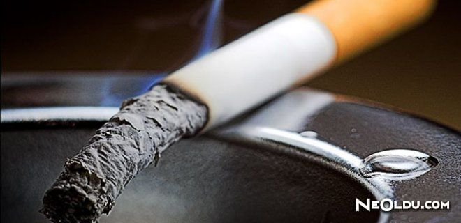 Sigara Hakkında Bilinmeyenler