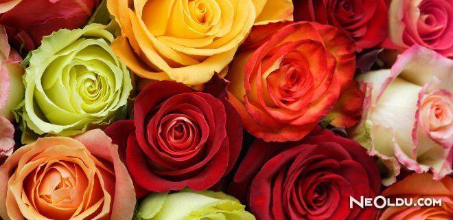 Güllerin Renklerine Göre Anlamları