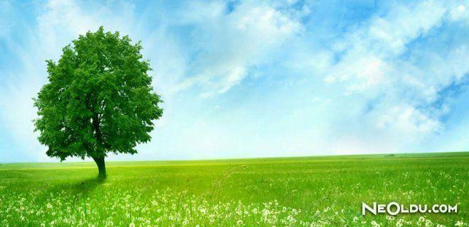Çevre-İnsan Etkileşimi