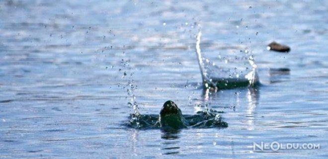 Taş Suyun Üstünde Nasıl Seker?