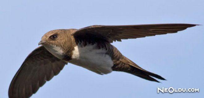 Ebabil Kuşunun Mucizesi