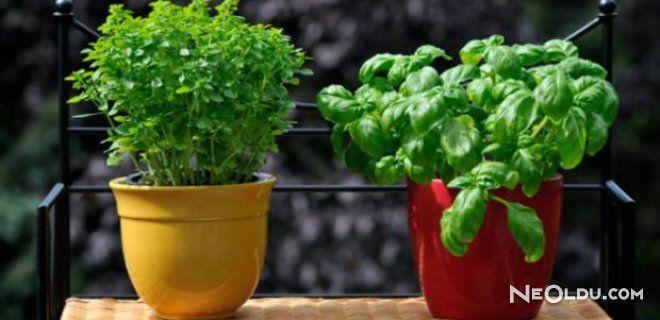 Bahçenizde Yetiştirmemeniz Gereken Bitkiler
