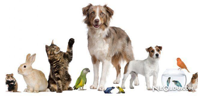 Evde Hayvan Beslemek Günah mıdır?