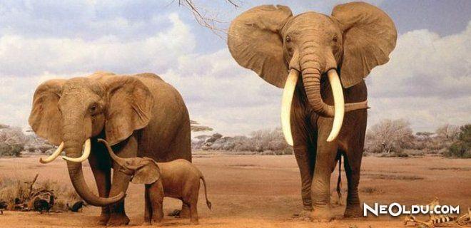 Dünyanın En Tehlikeli 10 Hayvanı
