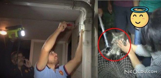 Termal Kameralı Kedi Kurtarma Operasyonu