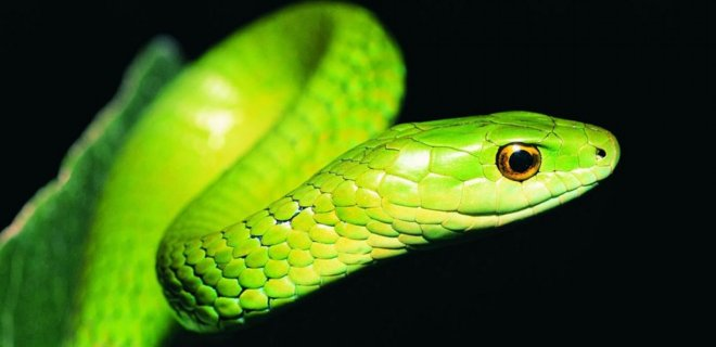 Rüyada Yeşil Yılan Görmek Ne Anlama Gelir?