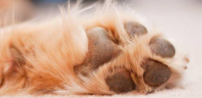 Falda Köpek Patisi Görmek Ne Anlama Gelir?