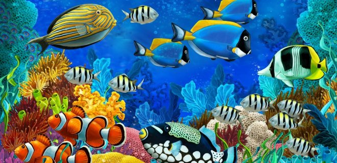 Dünya'nın En Renkli Balık Çeşitleri
