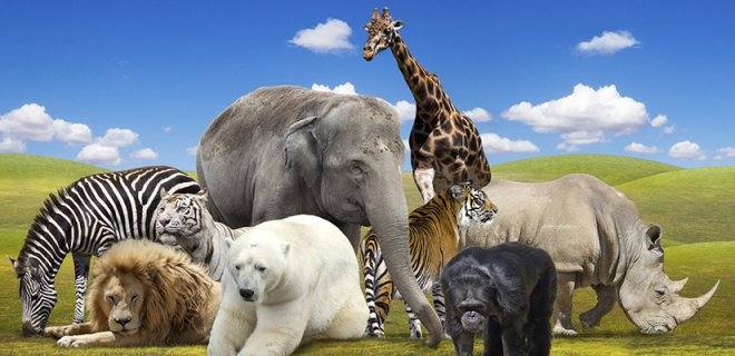 Hayvanlar Hakkında Bilgi - Hayvanlar Aleminin Bilinmeyen 10 Yanı