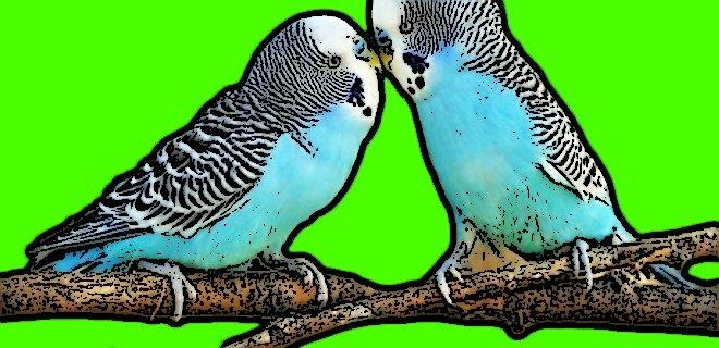 Evlenip Boşanan İlginç Kuşlar!