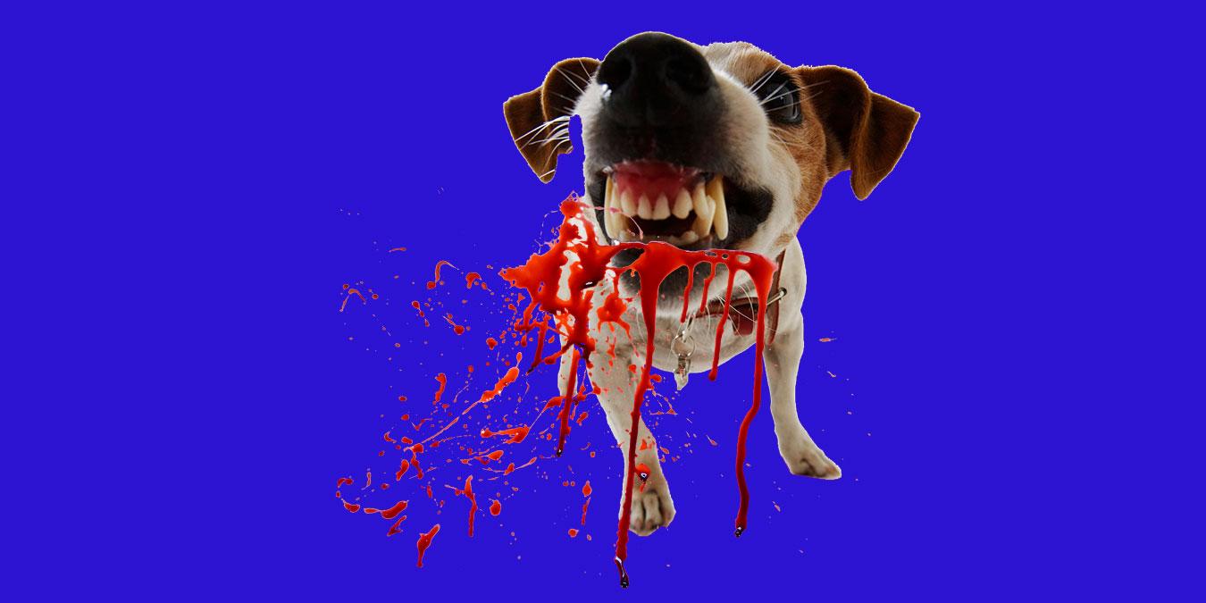 Köpek Saldırılarında İlk Yardım Nasıl Yapılır?