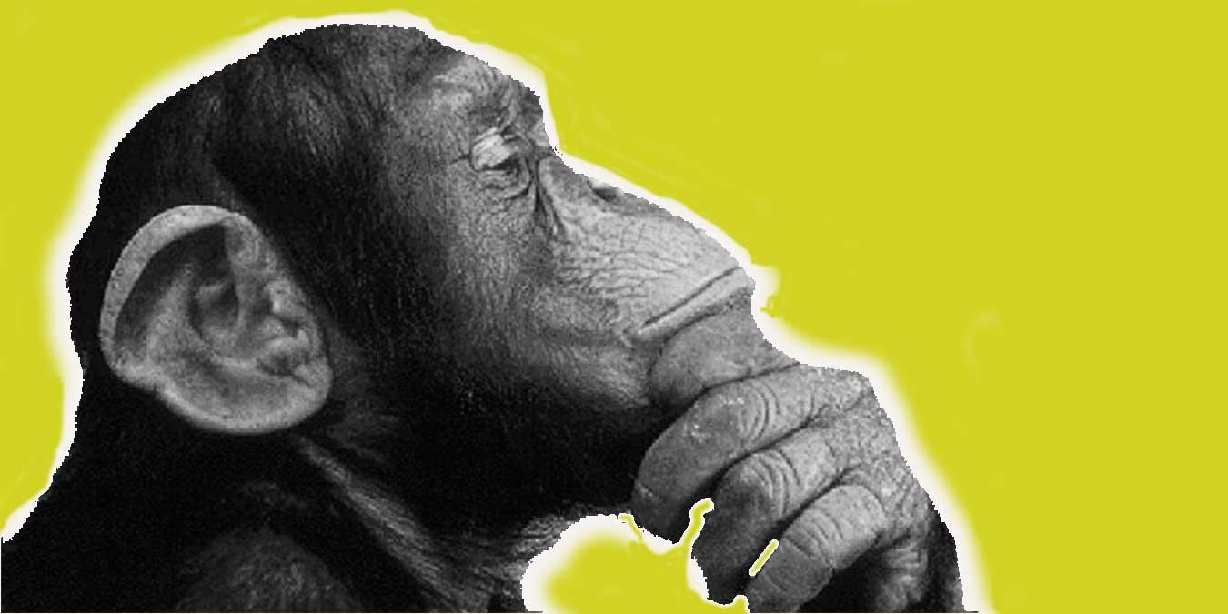 Maymunlar Hakkında Daha Önce Hiç Duymadığınız 20 İlginç Bilgi