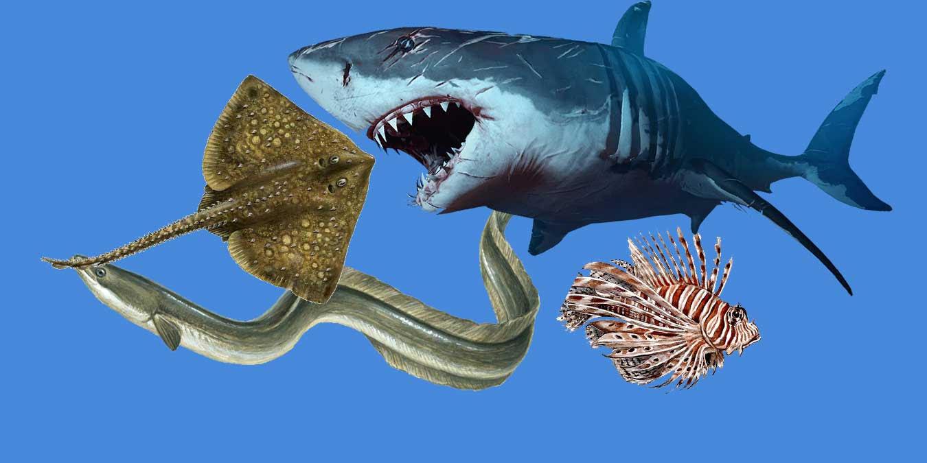 Okyanusların Yaramaz Çocukları! Dünyanın En Tehlikeli 10 Balığı