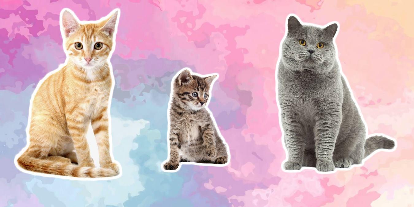 Şirin Dostlarımız Kediler Hakkında 25 İlginç Bilgi!