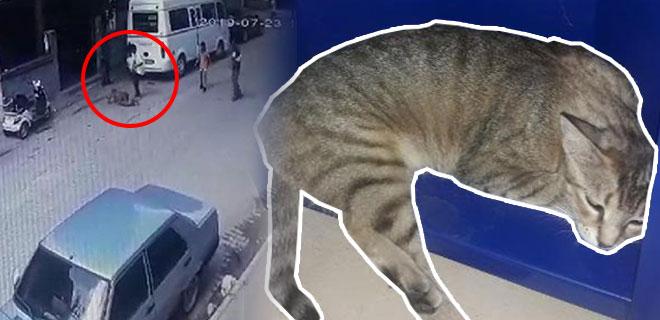 Kediyi, Pitbull'un Önüne Atıp Parçalamasını İzlediler! İşte Kan Donduran Görüntüler!