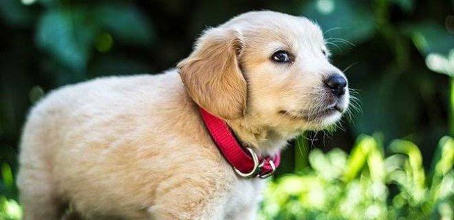 Köpeklere Mama Dışında Verilebilen Besinler