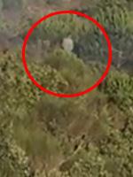 Pendik'teki Ormanı Yakan Cani Kameralara Takıldı! Ormanı İşte Böyle Yakmış…