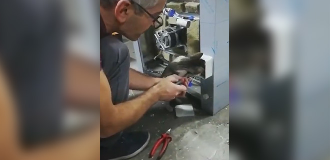 Elektrikçi Kedi Ustaya Yanlışlarını Gösterdi, Onay Verdi! İzleyenleri Güldüren Olay…