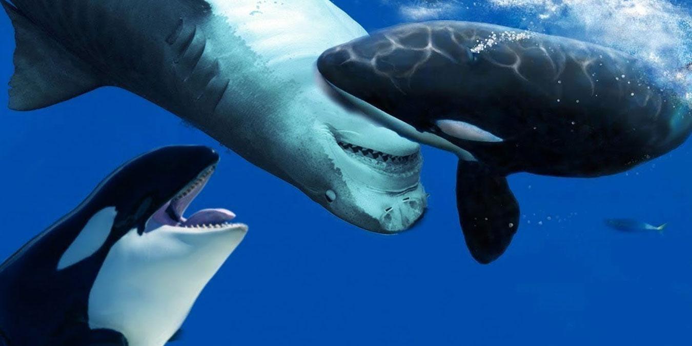 Katil Balinalar Hakkında İlginç Bilgi