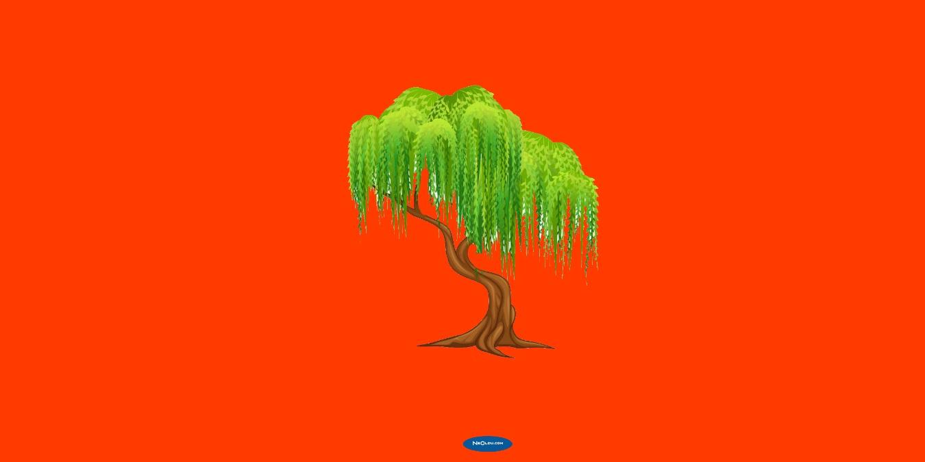 Rüyada Söğüt Ağacı Görmek Ne Anlama Gelir?