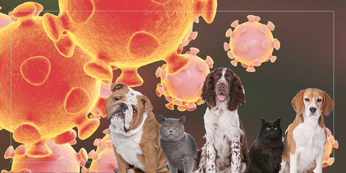 COVID-19 ve Hayvan Sağlığı: Koronavirüsün Hayvanlar Üzerinde Etkisi