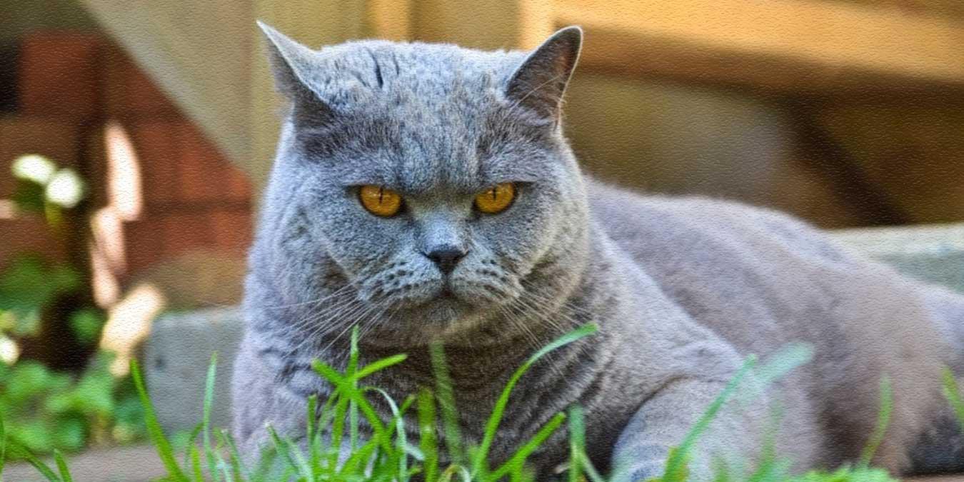 Yaşlı Kediler Ne Yer? En İyi 6 Yaşlı Kedi Maması