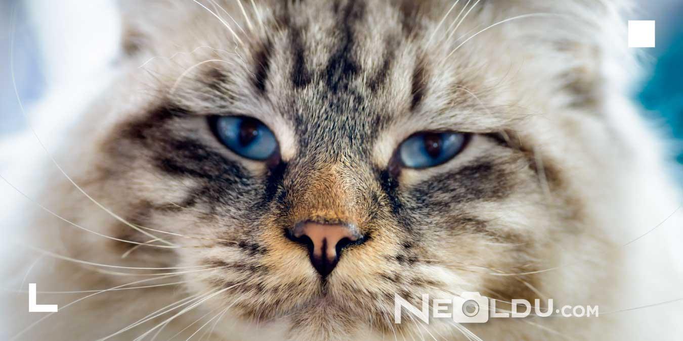 Kediler Ne Yer? Kedilerin Mama Dışında Yiyebileceği 6 Yiyecek!