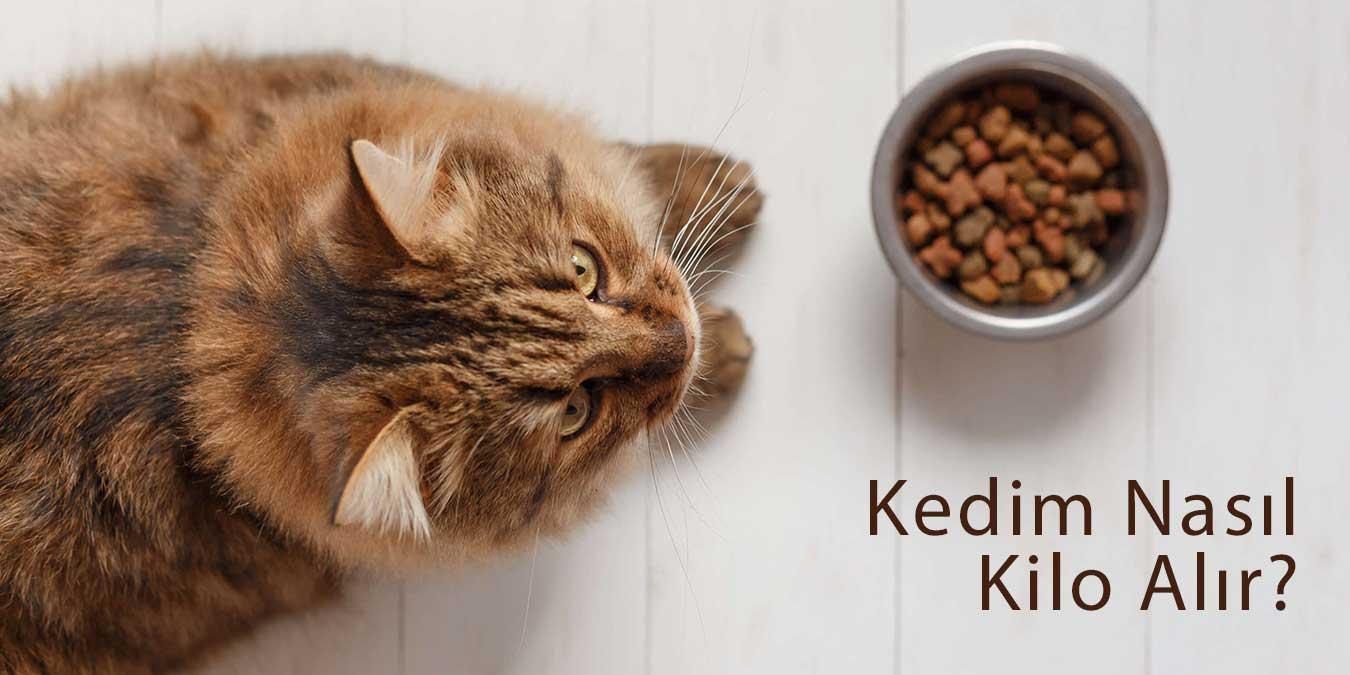 Kedim Nasıl Kilo Alır? En İyi 5 Yüksek Kalorili Kedi Maması