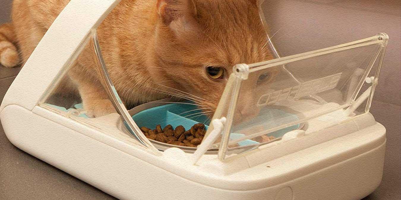 Kedi Mama Kabı Nasıl Olmalı? En İyi 5 Mama ve Su Kabı Modeli