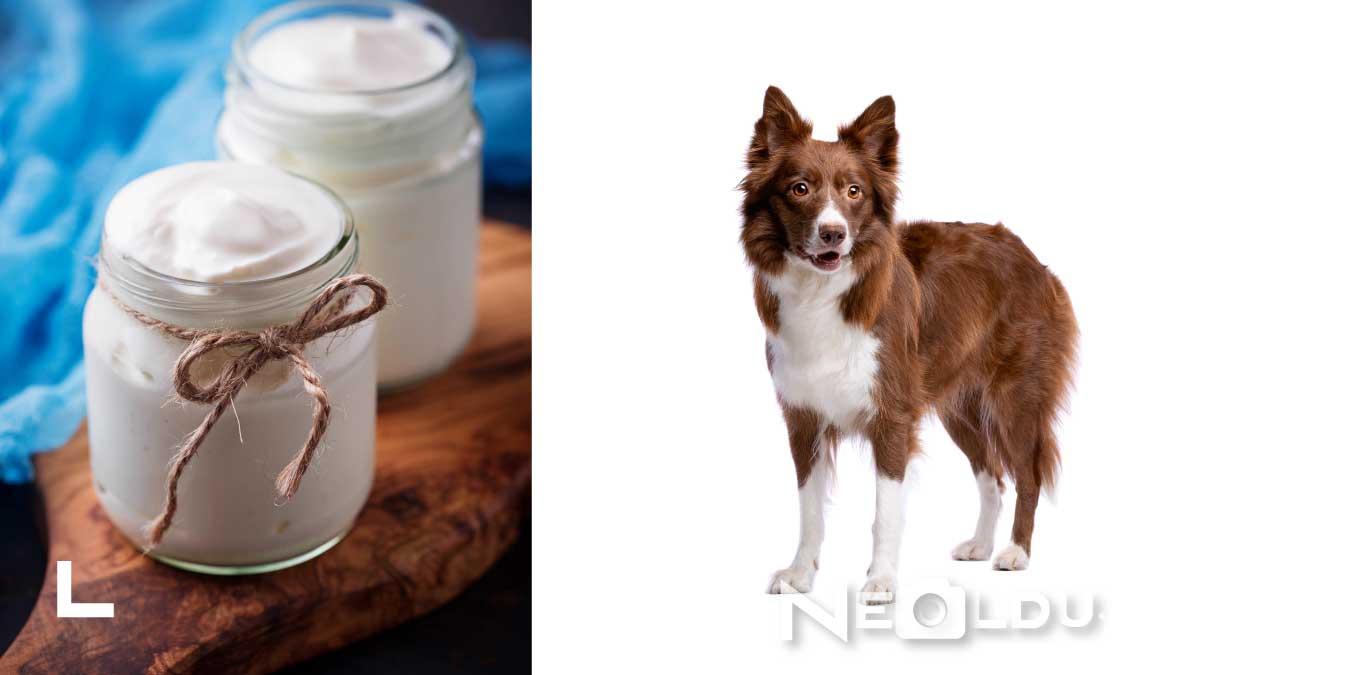 Köpekler Yoğurt Yer mi?