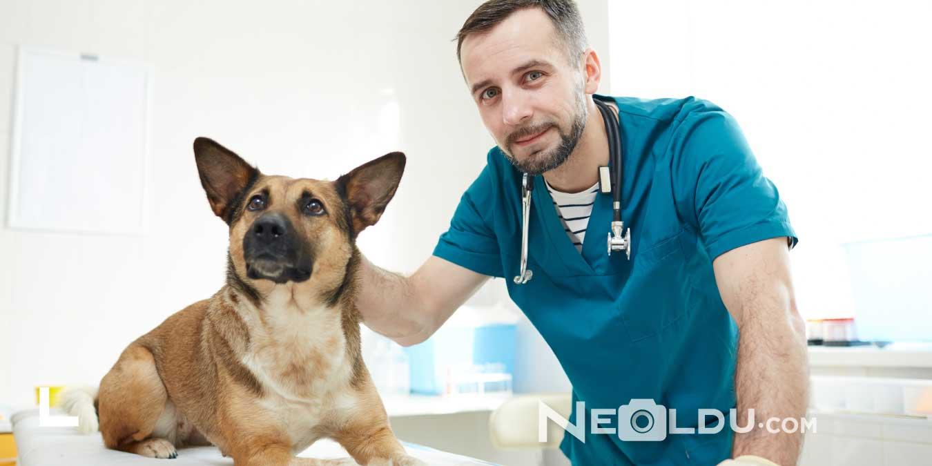 Köpeklerde Dışkı Yeme (Kaprofaji) Nedenleri ve Tedavisi