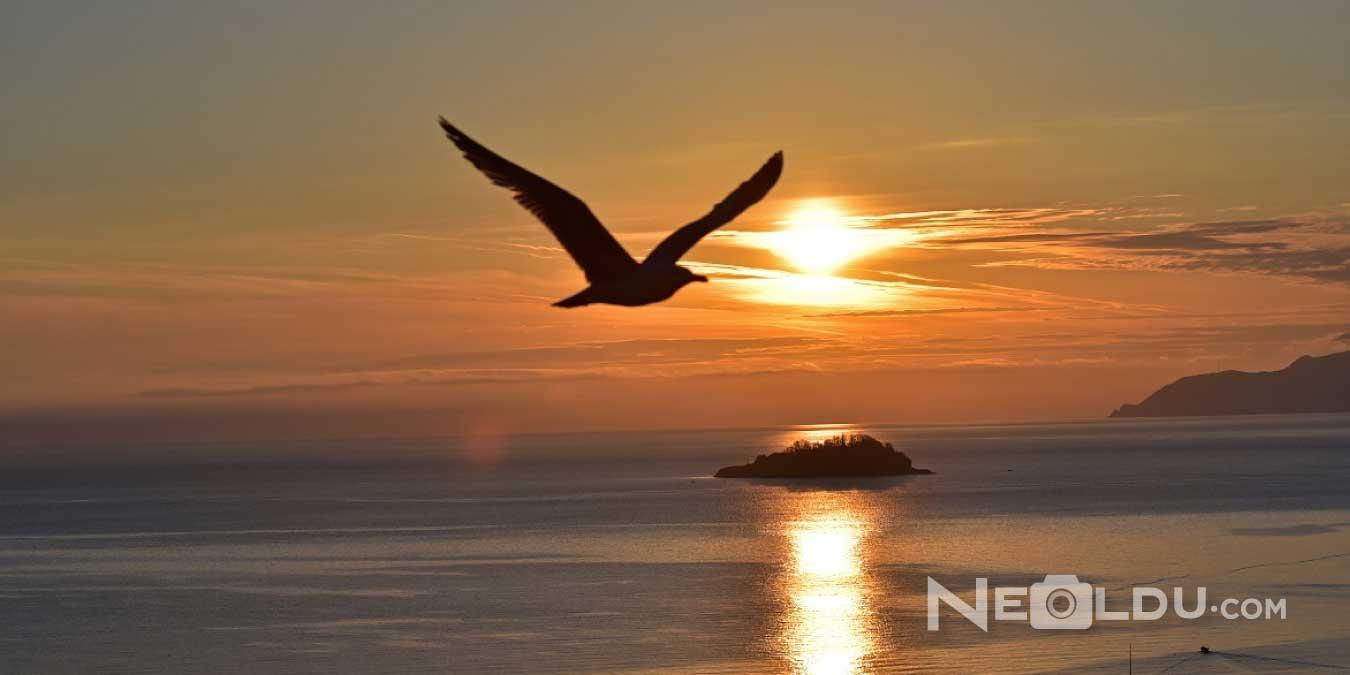 Havalı Sözler - En Güzel Afilli Havalı Mesajlar, Gizemli Havalı Sözler