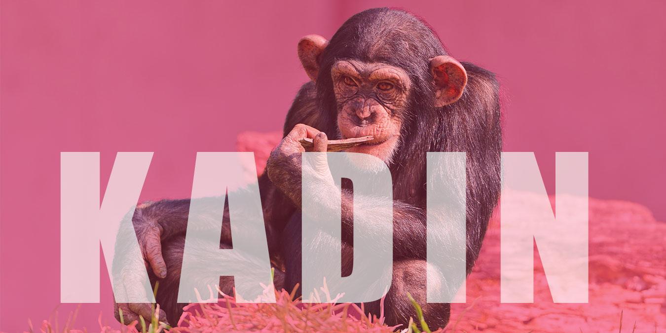 Maymunların Büyüttüğü Kadın; Marina Chapman