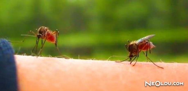 'Sivrisineklerden Nasıl Korunulmalı'