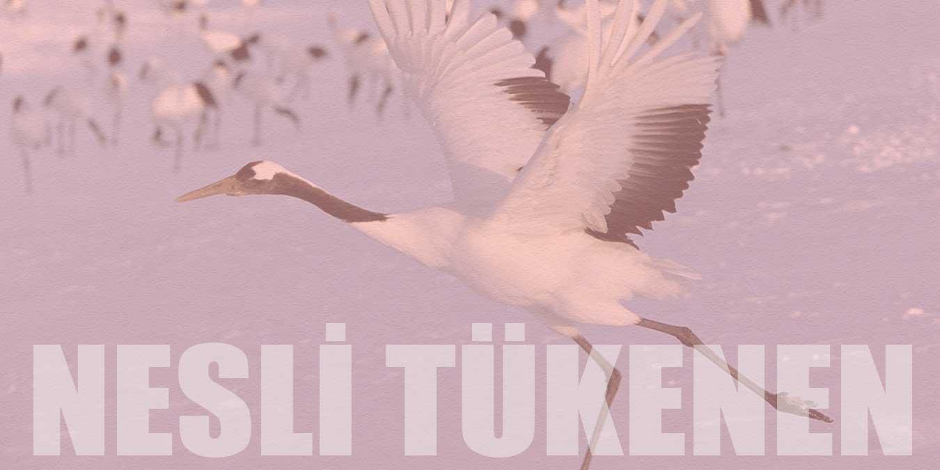 Türkiye'de Nesli Tükenen Hayvanlar   2021