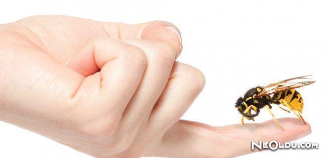 Arı Sokmasında Doğal Tedavi Yöntemleri ve Yapılması Gerekenler