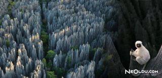 Rusya'nın Müthiş Efsanesi; Bir Günde Taş Kesen Orman