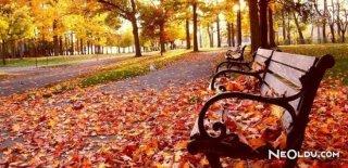 Sonbahar Sendromundan Kurtulmanın Yolları