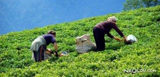 Çaykur'dan 40 Bin Kişilik İşçi Alımı