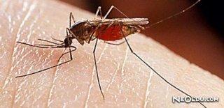 Sivrisinekler Tarafından Taşınan Hastalıklar