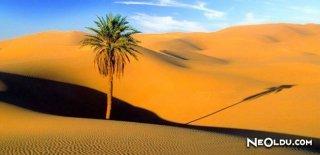 Sahra Çölü Hakkında Bilinmeyenler