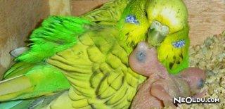 En İyi Muhabbet Kuşu Yemleri
