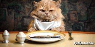 Kaliteli Beslenmek Her Kedinin Hakkı! İştah Kabartan En İyi 6 Kedi Maması