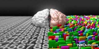 Beyninizin Hangi Lobunu Kullanıyorsunuz ?
