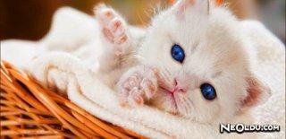İştah Kabartan En Kaliteli Yavru Kedi Maması Markaları ve Çeşitleri