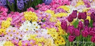Çiçeklerin Bilinmeyen Özellikleri
