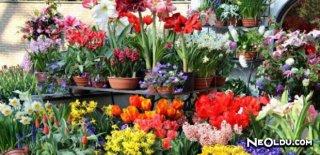 Çiçeklerin Anlamları Nelerdir?
